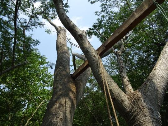 simple tree platforms. Branch Forkings Simple Tree Platforms R
