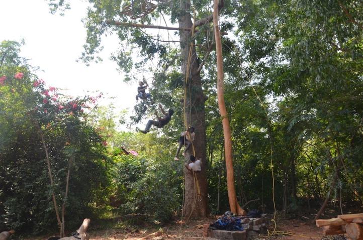 2016-3 TH2 mahogany (326)