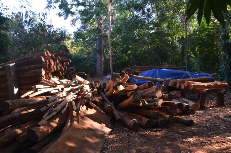 2016-3 TH2 mahogany (460)