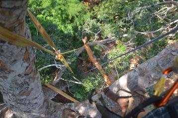2016-3 TH2 mahogany (77)