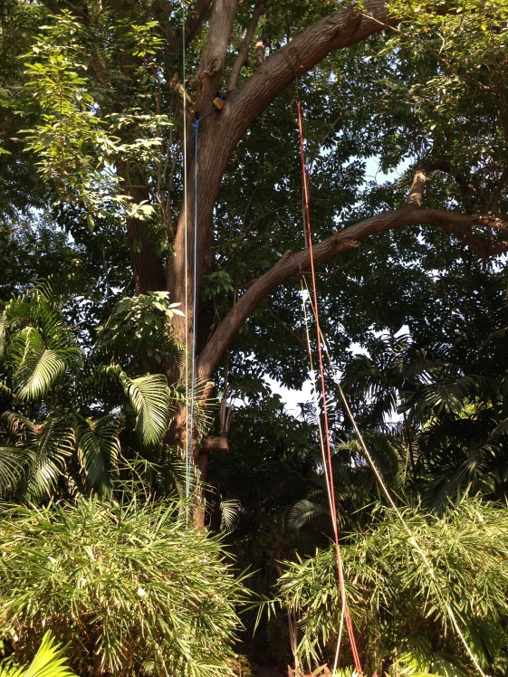 Tree Before Cyclone