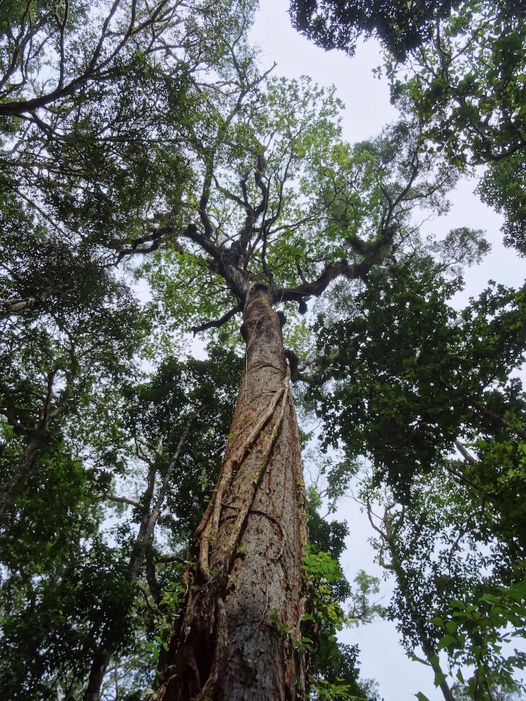 2nd tree climb
