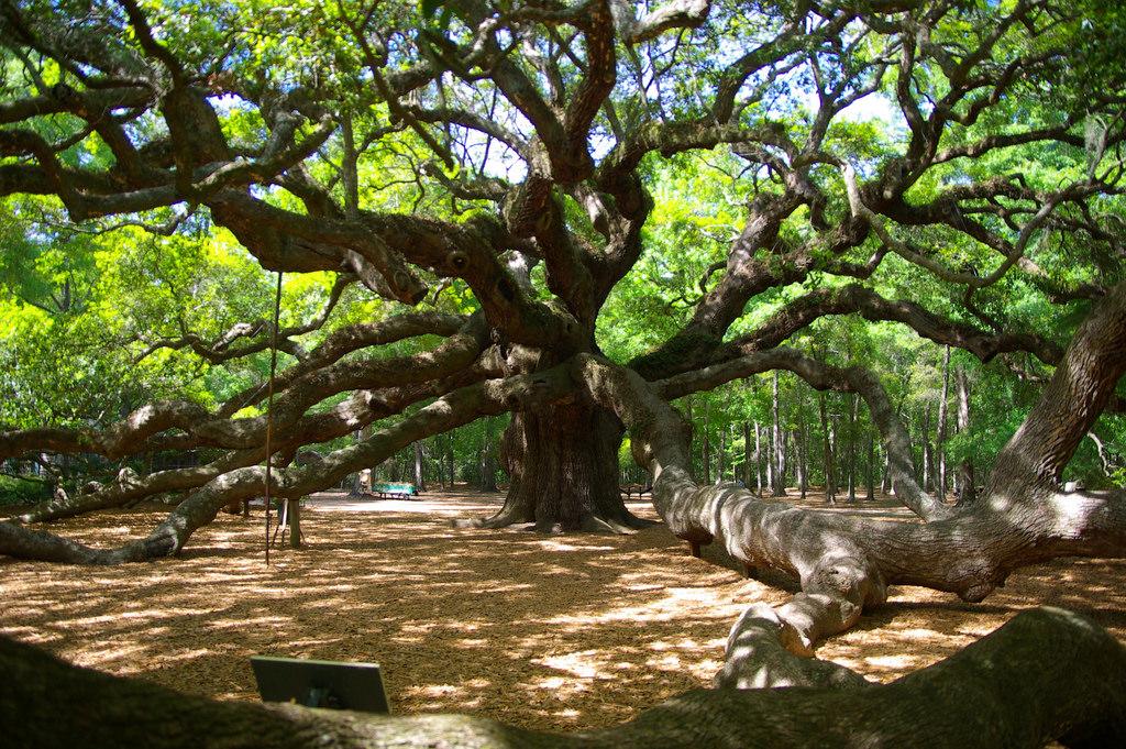 Angel Oak, Carolina