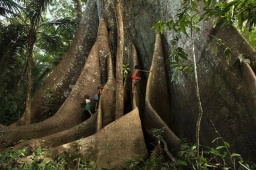 The biggest and baddest trees on our planet…