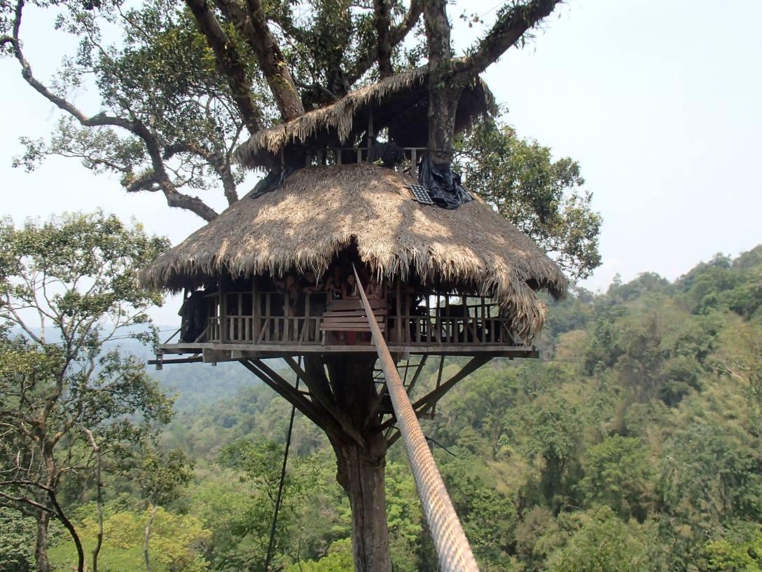 gibbon experience 2, loas